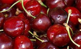 Cherries_263