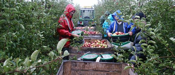 Team Bentley Apple Harvest 2015